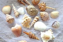 Sea Shells / by Sweet Dreams Canopies