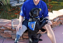 Dogs Heroes / Dogs that help people everyday
