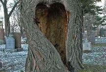 Hearts / by Lori Milton
