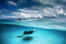 Under the sea / by Adventure Aquarium