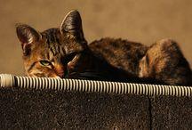 TOKIDOKI - CATS
