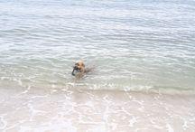 hond / avonturen van een hond