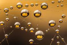 Laowa Venus Optics / Immagini scattate con gli obiettivi Laowa Venus Optics