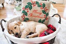 jak zrobić łóżko dla psa