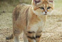 Wild Felines / by Sovereign Jasper
