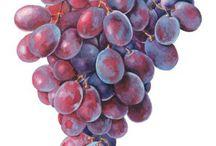 果実・木の実