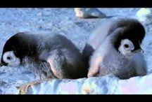 Theme - Penguins
