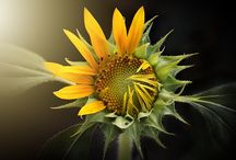 Flowers / Pictures, photos of beautiful garden and home flowers, plants