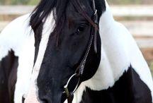 Horses / by Kathy Kurtz