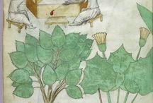 mikstury i zioła