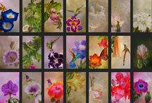 Herbarios / Obras de acrílico sobre tabla de 13,5 x 8,2 cm cada pieza.