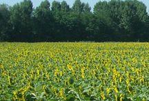 Giardino Biodinamico / Progettazione, Realizzazione e Manutenzione di Giardini Biodinamici.