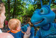 Disney World | Trip Planning