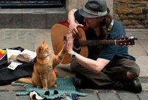 Friends / by T.J. Phillips