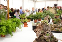 2011 Shrewsbury Flower Show