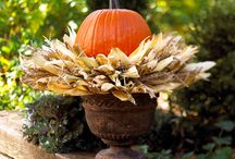 Fall/Halloween / by Kirsta Craig Houchin