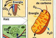 Colegio 10 TIC / Tablero Plan Nacional Colegio 10 TIC