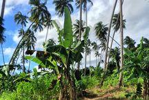 Fiji / Fiji Images