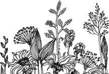 скетч ботаника