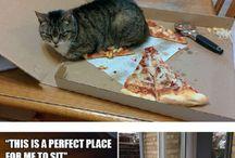 Humor com animais