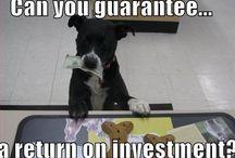 Stocks / The stock market