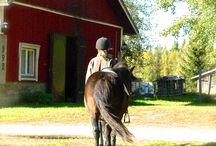 Hevoset♡ / Kavereina hevoset ja ponit