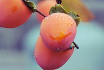 fruits and vegetables / by Sue L
