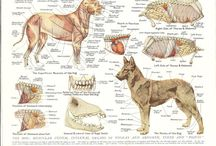 Anatomy / Dog and cat and exotic anatomy from skull to limbs