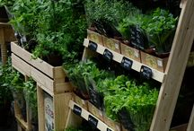Display Food Market