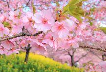 Printemps / Spring