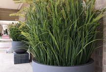 Pot planten
