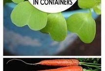 Vegetables specials
