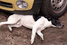 PfotenNews / PfotenNews - Das Hundemagazin mit vielen Infos rund um das Thema Hund, Hundeernährung, Urlaub mit Hund und Freizeit. / by Marco Ringpfeil
