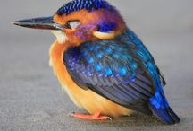 birdwatching!! / by Renee Keihn