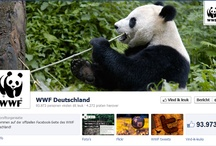 WWF Timeline Covers