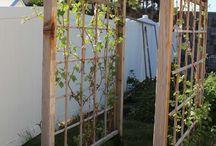 Fruit/Veg Garden