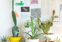Ma wee plants