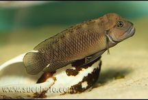 Akvarium a ryby