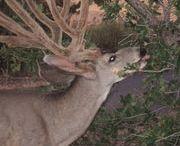 Hunting and camo