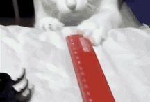 Omg cats