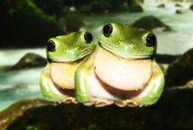 Frogs in memory of my sister Teri / by Donna Shubrook Heacock