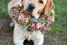 Wedding ideas: pets