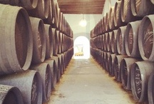 Bodegas - Wineries