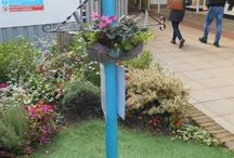 Breast Cancer Awareness month / Solihull organisations are showing their support for Breast Cancer Awareness month this October by turning bras into hanging baskets. http://www.solihull.gov.uk/news/ArtMID/820/ArticleID/1398/Bring-out-the-bra-skets