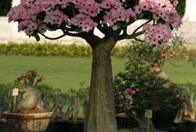 Bonsai rose tree