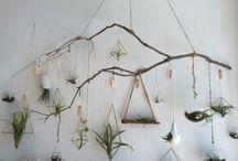 girls&plants