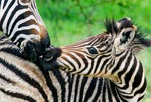 Safari / Destinations where you can get up close and personal in the wild.