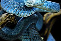 snakeeees