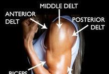 Exercises: arms & shoulder