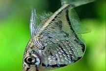 Acuarios peces y mas / Todo sobre #acuarios #peces #plantas